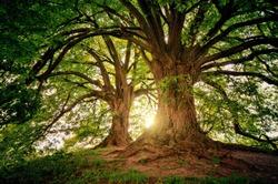 Journée de l'arbre